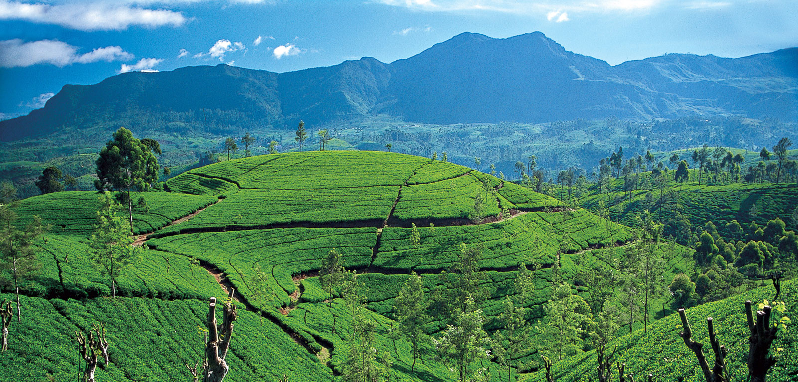 ceylon-tea-country-tea-trails-srilanka